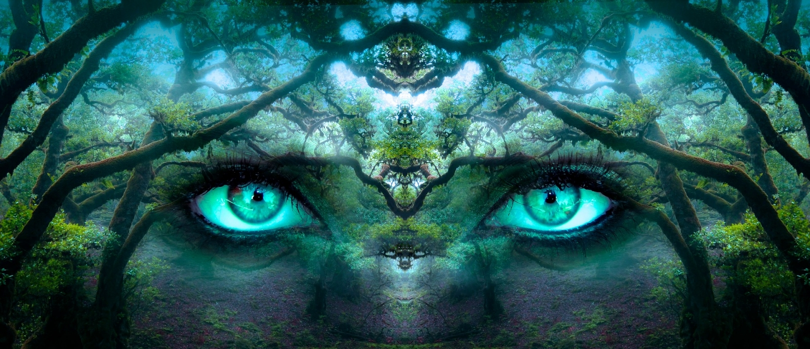 fantasy-eyes-in-forest